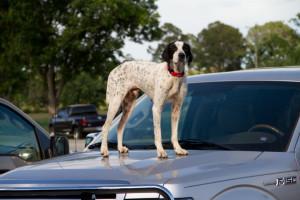 Robert Dasher's dog, Spot.